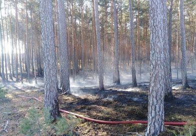 Spłonęło 25 arów poszycia leśnego!