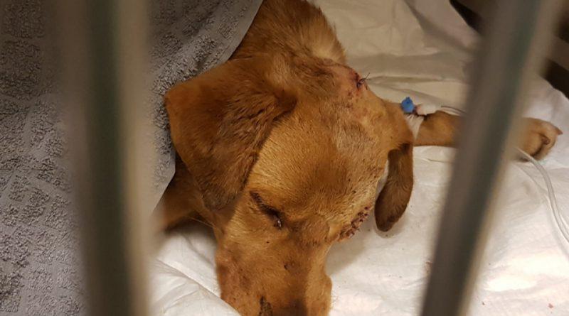Skatowany pies żywcem zakopany w lesie! Nagroda za wskazanie sprawcy!